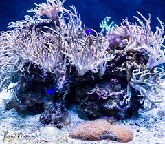 _X4C7140 (Ron Milsom) Tags: bluereefaquarium newquay cornwall uk