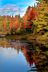 Algonquin Park in Fall, Ontario, Canada (klauslang99) Tags: klauslang nature naturalworld northamerica canada algonquin park ontario water lake fall forest autumn landscape