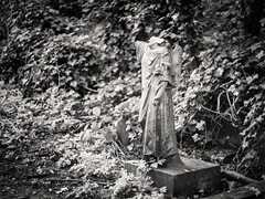 20190302-0063-Edit (www.cjo.info) Tags: 1840 1840s 19thcentury allsaintscemeterynunhead bw england europe europeanunion london m43 magnificent7 magnificentseven magnificentsevengardencemeteries microfourthirds nikcollection nunhead olympus olympuspenfgzuikoautos40mmf14 olympuspenf penfmount silverefexpro silverefexpro2 southwark unitedkingdom westerneurope angel animal art blackwhite blackandwhite blur bokeh broken carving cemetery climbingplant decay digital fauna flora focusblur foliage girl gravegraveyard headless ivy leaf manualfocus monochrome mythicalcreatures overgrown people plant sculpture shallowdepthoffield statue stone stonework wingedcreature woman wooded