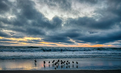 A Crowd Gathers for Sunset (tquist24) Tags: california hdr nikon nikond5300 outdoor oxnard oxnardshores pacificocean wildlife beach birds clouds coast evening geotagged nature ocean outside sand seascape shore sky sunset water
