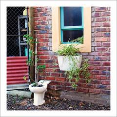 Recyling (Daniela 59) Tags: wall wednesdaywalls window bricks brickwork brickwall potplants piekenierskloofpass westerncape southafrica danielaruppel