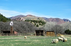 A Bit of the Country in the City (Patricia Henschen) Tags: nationalnaturallandmark city park citypark colorado coloradosprings gardenofthegods redrocks rock formations mountain mountains frontrange rampartrange urban ranch rockledge rockledgeranch bucolic historicsite clouds sheep windmill
