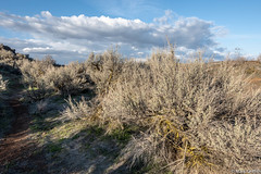 Sagebrush and Clouds (Mark Griffith) Tags: ancientlakes annual backpacking camping desert dustylake easternwashington overnighter quincy sonyrx100va traditions washington 20190329dsc01703