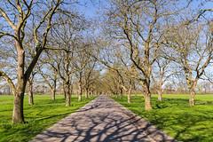 A narrow road through the landscape (jan.vd.wolf) Tags: betuwe holland thenetherlands gelderland nederland nl