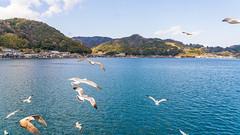 DSC01306 (Neo 's snapshots of life) Tags: japan 日本 京都 kyoto amanohashidate 天橋立 あまのはしだて sony a73 a7m3 24105 伊根