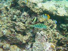 Maldives (Andy Latt) Tags: 20181124091928 andylatt maldives moofushi indianocean ocean sea coral dive snorkel underwater