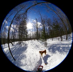 Roundabout in the Laurentians (deanspic) Tags: explore sunset fisheye forest 6d snowshoeing hilltop center centerpoint snow winter trees lakelouisa quebec ef815mmf4lfisheyeusm ef815mmf4l