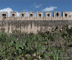 almenas y opuntias II (carlosjunquero) Tags: cactus opuntias almenas castillo sagunto