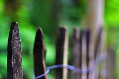 A Fence in Grenoble, France (Haytham M.) Tags: spring simplicity simple natural dark greenery green street france grenoble fence wood