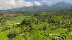 Jatiluwih Rice Terrace, one of UNESCO World Heritages (SjPhotoworld) Tags: bali indonesia jatiluwih unesco rice riceterrace nature landscape beautiful holiday trip balidaily mountain heritages