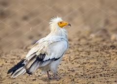 IMG-20171229-WA0014 (TARIQ HAMEED SULEMANI) Tags: sulemani tariq tourism trekking tariqhameedsulemani winter wildlife wild birds nature nikon