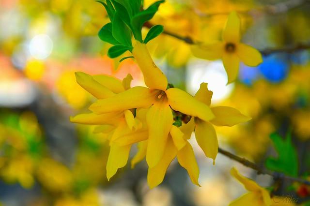 Обои Весна, Yellow flowers, Жёлтые цветочки картинки на рабочий стол, раздел цветы - скачать