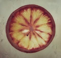 Tengo media naranja que me quiere. Nada de cebollas que me hagan llorar o limones que me amarguen la vida. (elena m.d.) Tags: macromondays nikon d5600 sigma sigma105
