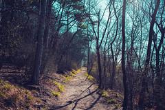 KRIS8032 (Chris.Heart) Tags: erdő buda budapest túra természet forest nature hiking