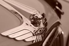 Jaguar MkVII 1956, HRDC Track Day, Goodwood Motor Circuit (5) (f1jherbert) Tags: sonya68 sonyalpha68 alpha68 sony alpha 68 a68 sonyilca68 sony68 sonyilca ilca68 ilca sonyslt68 sonyslt slt68 slt sonyalpha68ilca sonyilcaa68 goodwoodwestsussex goodwoodmotorcircuit westsussex goodwoodwestsussexengland hrdctrackdaygoodwoodmotorcircuit historicalracingdriversclubtrackdaygoodwoodmotorcircuit historicalracingdriversclubgoodwood historicalracingdriversclub hrdctrackday hrdcgoodwood hrdcgoodwoodmotorcircuit hrdc historical racing drivers club goodwood motor circuit west sussex brown white sepia bw brownandwhite