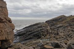 Cliffs,Collieston_Mar 19_447 (Alan Longmuir.) Tags: grampian aberdeenshire collieston cliffs