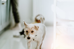 Partners in Crime..... (christilou1) Tags: sony a7riii fe85 14 gm dog baby girl toddler kitchen home style tribearchipelago f s basecamp blonde jack russell terrier