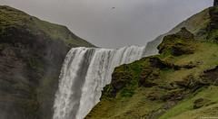 Skógafoss, Iceland (tomst.photography) Tags: birds tomst vögel island iceland islanda natura nature waterfall skogafoss wasserfall cascata