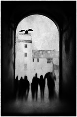 """We are the something that will not conform"" (Lucretia My Reflection) Tags: lensbaby sweet50 tiltlens selectivefocus blur bokeh outoffocus seeinanewway street streetphotography blackandwhite bw lucca oldcity shadow souls arch lodge loggia piazzaanfiteatro anfiteatro bird texture surreal dream haunting"