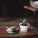 coffee in saucer beside plant on table - Credit to https://myfriendscoffee.com/