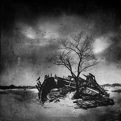 time will tell (Dyrk.Wyst) Tags: 2017 bassenormandie cotentin france frankreich normandie reise coast landscape travel surreal composite blackandwhite birds wreck shipwreck clouds dramatic tree baretree mood absoluteblackandwhite