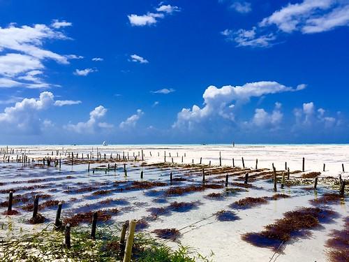 Reef & Beach Resort Surroundings