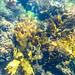 St Leonards Pier Underwater-26