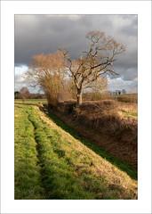 Edingley Beck (Steve-T201) Tags: edingleybeck nottinghamshire countryside trees sunlight