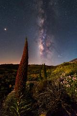 Moonlight Bugloss (Sebastian Tontsch) Tags: bugloss tenerife spain moon