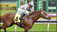 Cozze Kid - March 1, 2019 Allowance / Optional Claiming Race (billypoonphotos) Tags: alejandro gomez 2019 filly chestnut shanghai kid cozze road people grass building stadium sport sign mm 18140 race synthetic finish win stretch news nikkor 18140mm d5500 nikon billypoonphotos billypoon photographer photography picture photo track dirt thoroughbred racing horse jockey berkeley fields gate golden tapeta