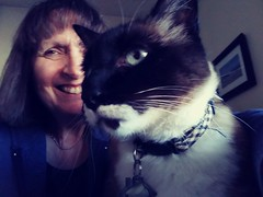 Me & Izzy (Donna's View) Tags: cellphone phonepic cat selfie siamesecat