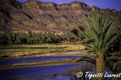 Dans la vallée du Draa (Maroc) (tognio62) Tags: fleuve vallée maroc montagne désert oasis végétation palmier panorama village