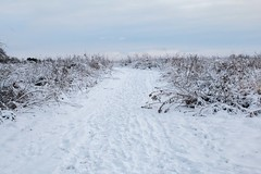 Snow Field Forever (Blue River Photos) Tags: wisconsin photosrural picturerural photobeautiful pictwisconsinphotos ruralpicture ruralphoto beautifulpicture beautifulphoto prettypicture prettyphoto scenic lanscape tameronlens canoncameras 24to70 fineart snow