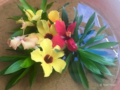 🌼🌸 (✿ Graça Vargas ✿) Tags: graçavargas ©2019graçavargasallrightsreserved flower iphone appleiphone6s hibiscus hibisco 40206210819