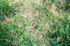 Hey look, some weeds (Matthew Paul Argall) Tags: canonsnappy20 fixedfocus focusfree 35mmfilm kodakultramax400 kodak400 ultramax 400isofilm weeds plants