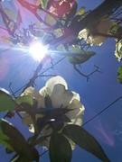 20181218_120229 (Feralysa) Tags: flor flower rosa hibisco natureza