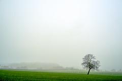 Misty Meadows (Bephep2010) Tags: 2018 7markiii alpha baum breinig deutschland germany ilce7m3 landschaft nrw nebel nordrheinwestfalen northrhinewestphalia sel85f18 sony stolberg wiese winter zaun fence fog grass green grün landscape meadow mist misty neblig tree trees weiss white ⍺7iii de