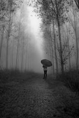 Girl in the fog (lele_photographer_italy) Tags: amazing alberi foresta umbrella bw blackandwhite forest trees wild girl fog