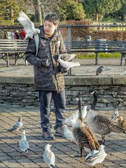 32/365 The Bird Whisperer (Charlie Little) Tags: p365 project365 bowness windermere lakedistrict cumbria candid streetphotography cameraphone mobilephotography huawei p20pro birds