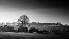 Sutton Scarsdale, Derbyshire (DarrenH07) Tags: nikond7500 tamron 1750mm f28 blackandwhite bw countryside lightmist