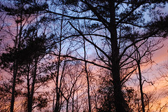 Evening Sky. (dccradio) Tags: lumberton nc northcarolina robesoncounty sunset evening eveningsky sky color colorful colorfulsky tree trees treebranch branch branches treebranches settingsun sunsetsky february winter sunday sundayevening goodevening nikon d40 dslr nature natural silhouette cloud clouds beauty beautiful pretty