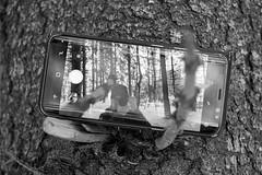 Forest - Finland (Sami Niemeläinen (instagram: santtujns)) Tags: metsä forest puu tree kuhasalo joensuu suomi finland talvi winter mustavalkea blackandwhite monochrome puhelin kamera camera selfie mobilephone cellular