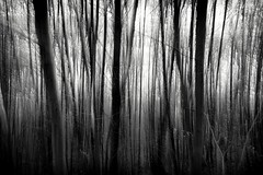enchanted (fhenkemeyer) Tags: abstract icm hattingen bw forest woods trees