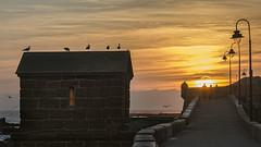 Cae la tarde / The afternoon falls (Romano Off) Tags: atardecer gaviotas sol cádiz nikond7200 castillo horizonte camino castle sunset seagulls sun road horizon