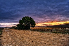 Amanecer en el camino (frankalf37) Tags: autumn españa awake bluesky cadiz clouds cloudy color colorful dawn dawning daybreak daylight landscape longexposure nature spain sunrise tree