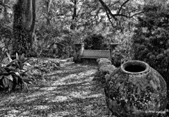 Pinewood Estate (pandt) Tags: pinewoodestates lakewales bok monochrome outdoor nature botanical forest trees bench canon eos 6d slr branches history boktower blackandwhite pinewood bw florida park garden grass tree tiles