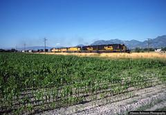 Rio Grande to the Rescue (jamesbelmont) Tags: railway riogrande unionpacific mrodv manifest pasture agriculture corn jensen riverton draper south jordan utah emd sd40t2 tunnelmotor helper ge c408 sd60m