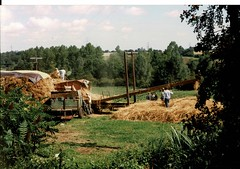 Ransome's Thresher Thatching in Stoke-by-Nayland 1990's Photo's by Alf Jefferies (Photos by Alf Jefferies) Tags: english country garden view thresher ransomes haystack hayrick thatcher men working fields photos by alf jefferies tractor suffolk england 1990s tied cottage