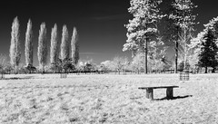 Bench II (James Etchells) Tags: barrington court infrared ir landscape national trust black white monochrome landscapes outdoors outdoor natural world nature art artistic creative surreal south west england uk britain tree trees nikon somerset photography fields field light dark winter spring wintery perspective