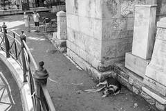 untitled (gregor.zukowski) Tags: athens ateny tourists ruins oldcity street streetphoto streetphotography peopleinthecity dog blackandwhite blackandwhitestreetphotography bw fujifilm monochrome